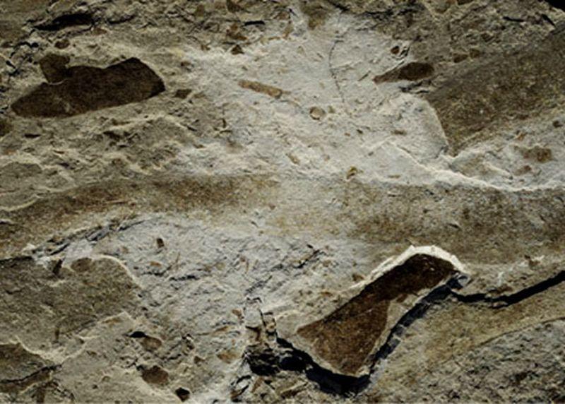 В Китае нашли окаменелости древнейшего крупного многоклеточного организма