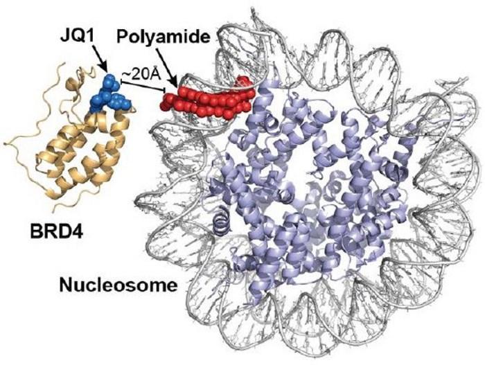 Гибридная молекула помогла «расчистить завалы» в ДНК при атаксии Фридрейха