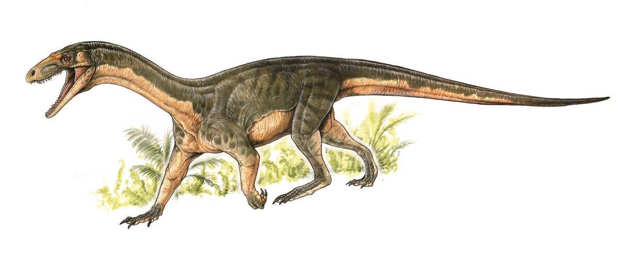 Древнейший сородич динозавров рассказал о разделении птиц и крокодилов