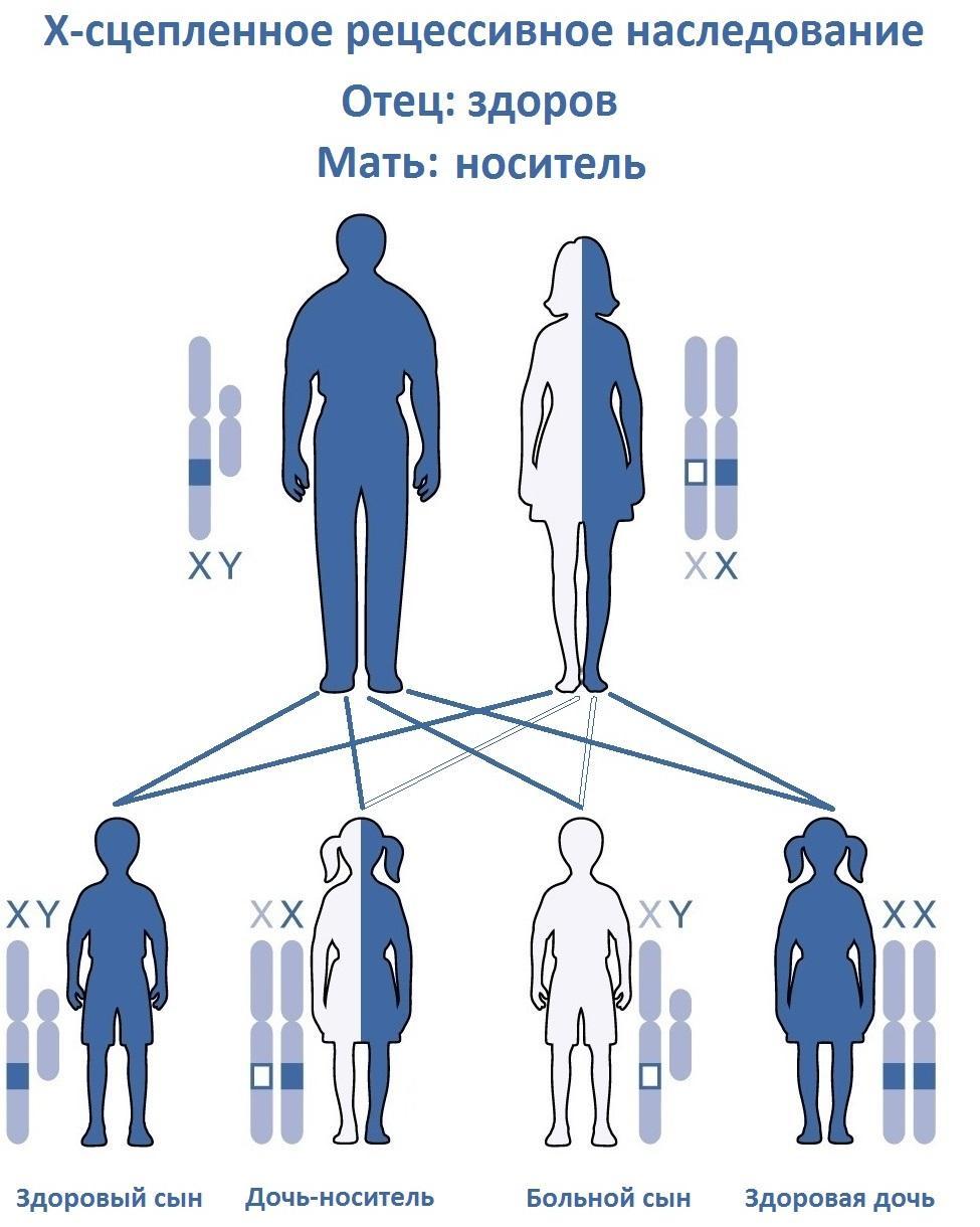Исследователи впервые вылечили гемофилию А благодаря генной терапии