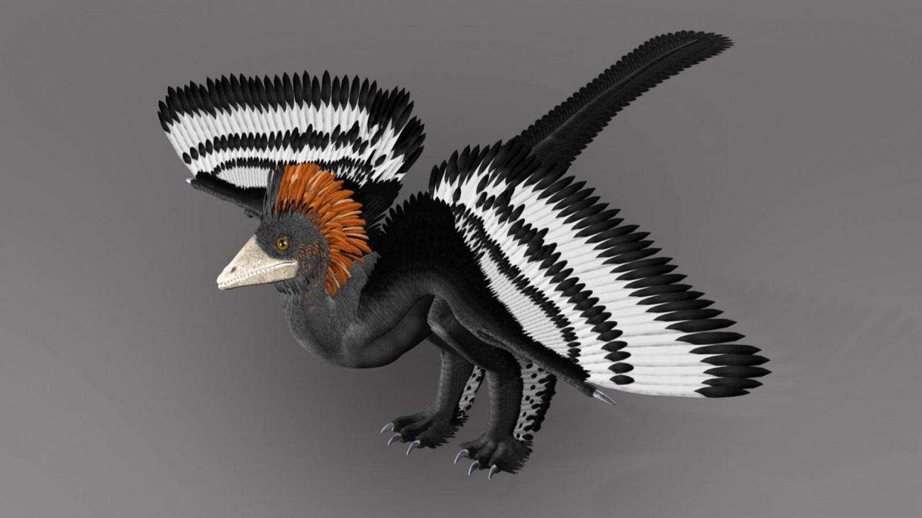 первый найденный археоптерикс оказался другим динозавром