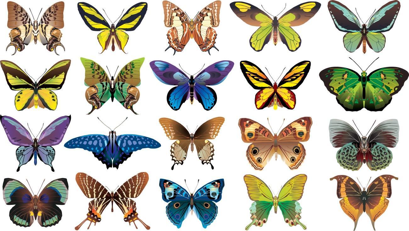 за 27 лет масса летающих насекомых в Европе уменьшилась на 76 процентов