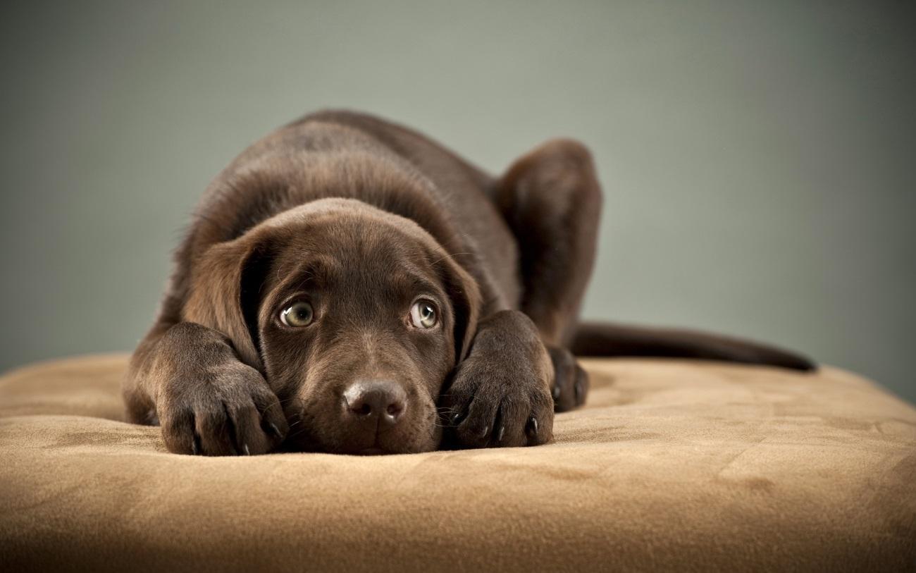 Негативные переживания ухудшили собачий сон