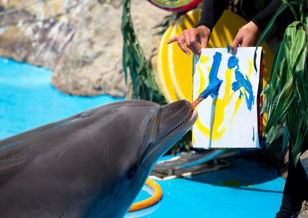 действительно ли дельфины так умны, как о них говорят