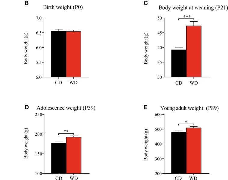 диета беременных крыс повлияла на вкусовые привычки их потомства