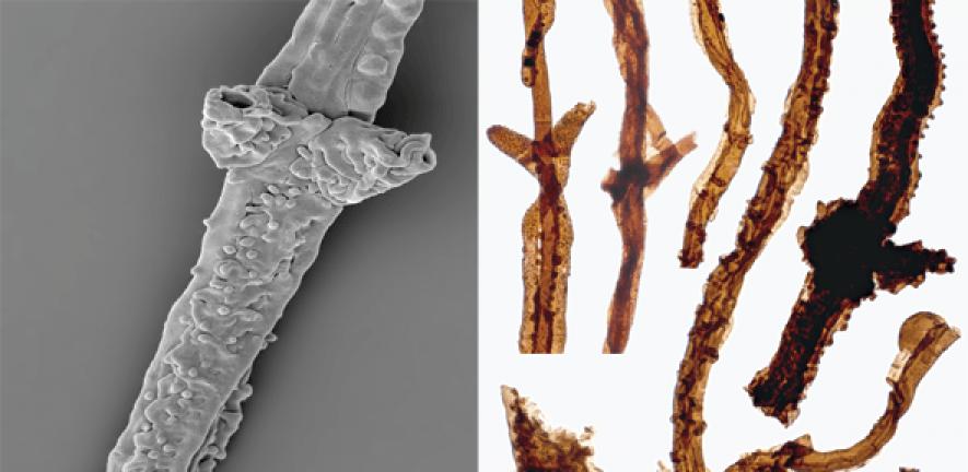 Самыми древними из обнаруженных окаменелостей наземных организмов оказались грибы