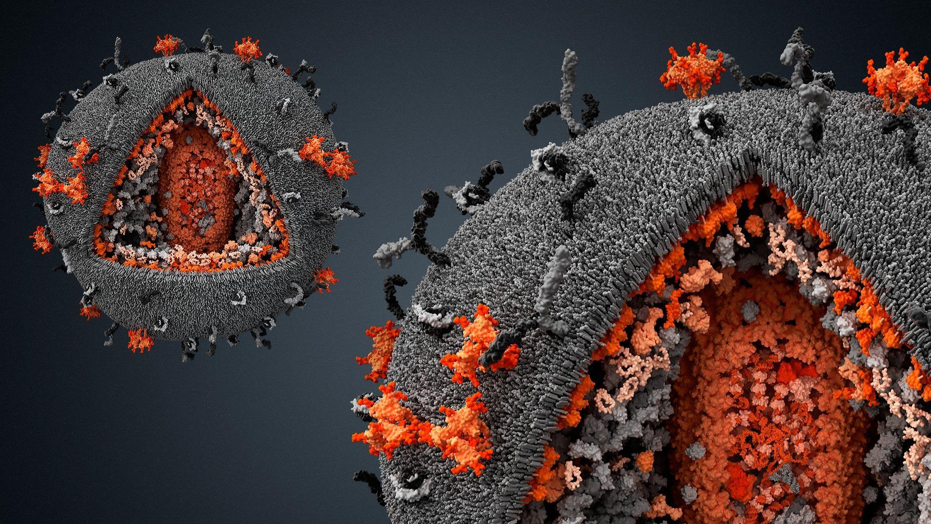 Вирус против вируса