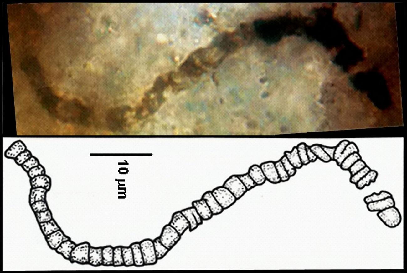 ученые завершили 35-летний спор о достоверности ископаемых возрастом 3,5 миллиарда лет
