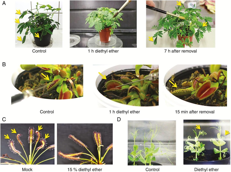 анестезия для растений