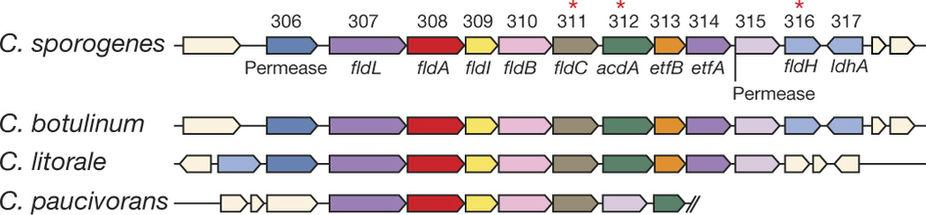 Генномодифицированная микробиота поможет улучшить иммунитет