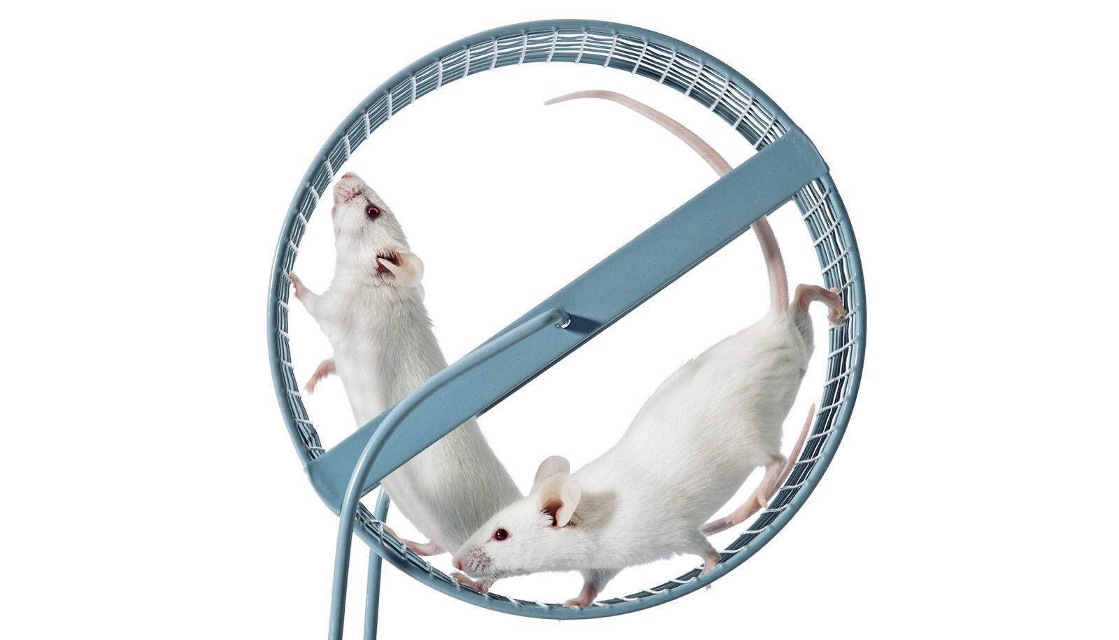 Учёные создали эпигенетическую мышь-лежебоку