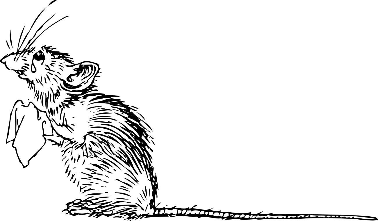 буллинг привел к нарушениям сна у мышей
