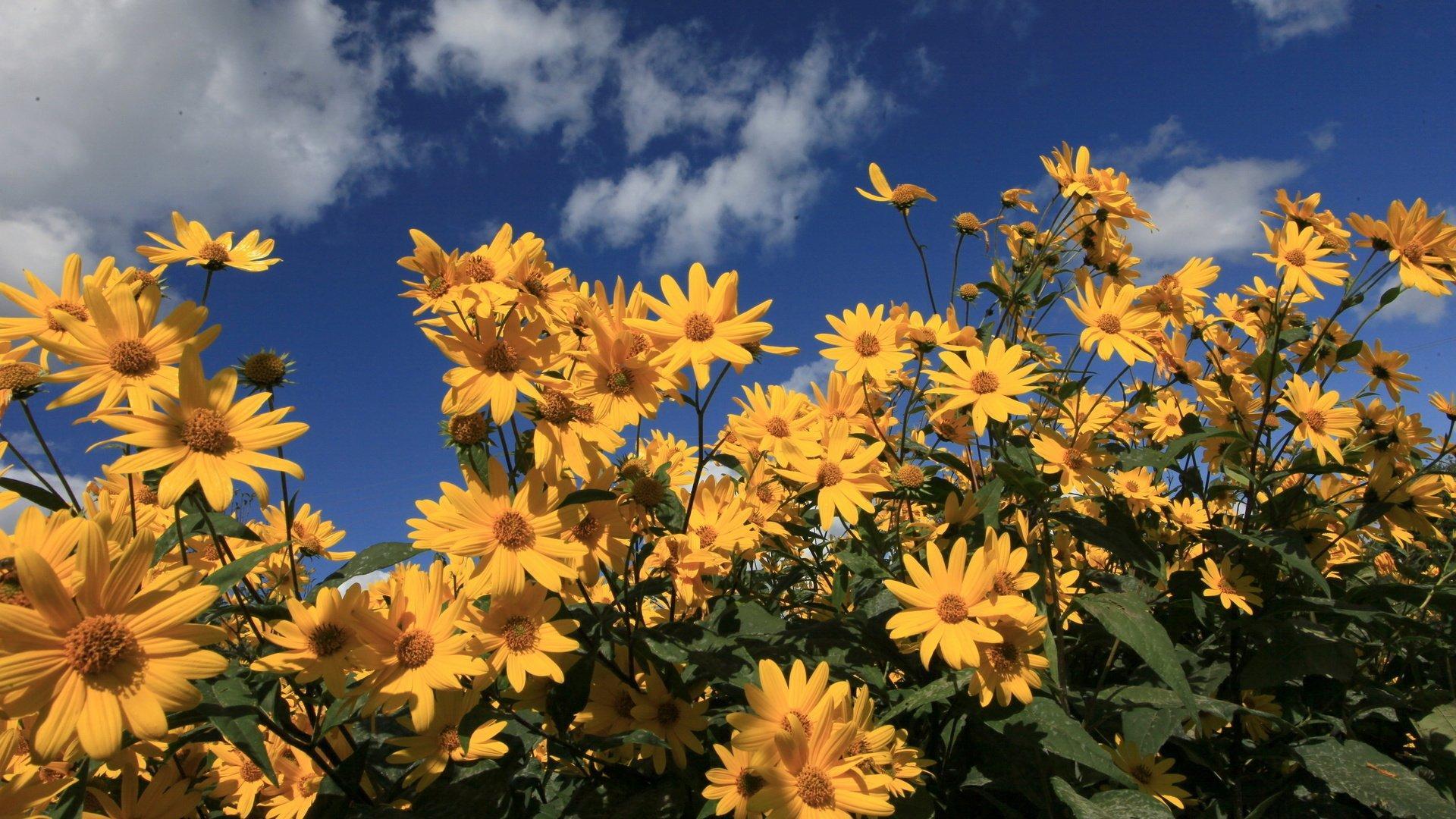 Цветковые растения появились на Земле на 100 миллионов лет раньше