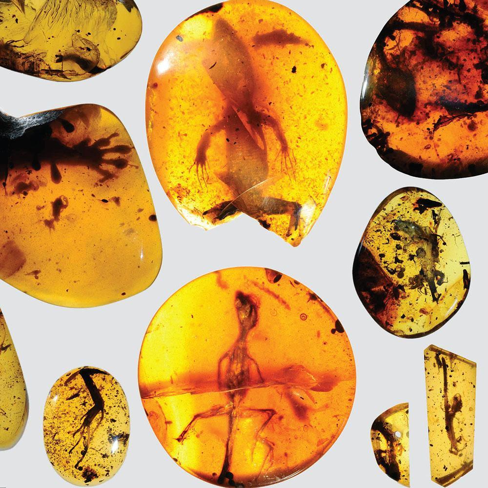 старейший в мире хамелеон и 11 древних ящериц были обнаружены в янтаре