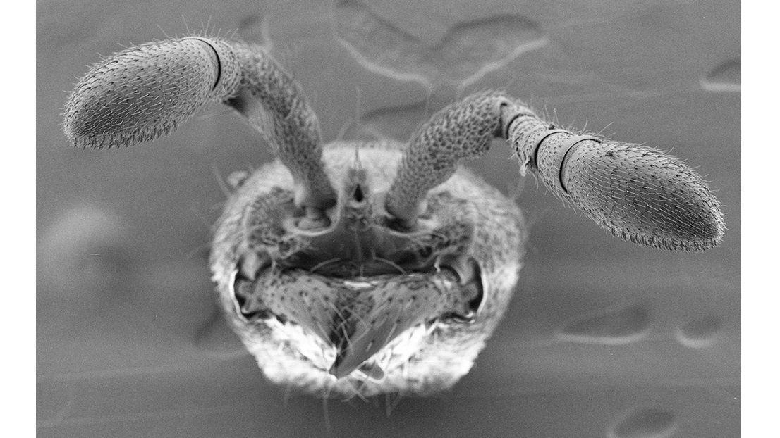 Технология CRISPR помогла создать муравьёв-мутантов, которые оказались антисоциальными
