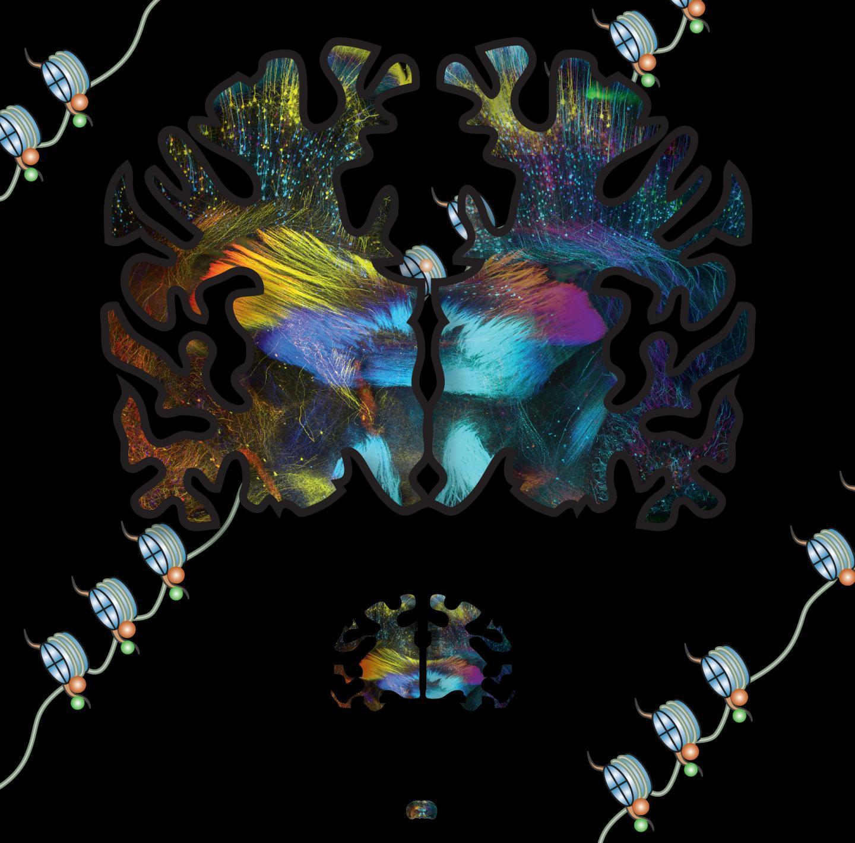 Учёные составили карту регуляторов нейрогенеза