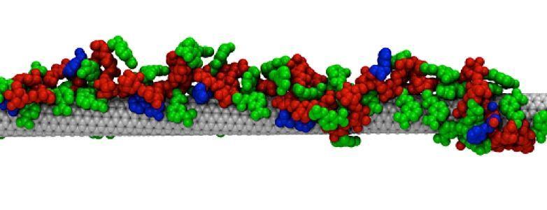 Химики создали синтетические антитела для укрепления иммунитета