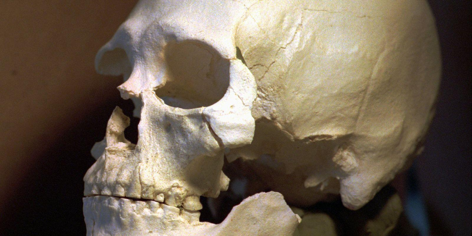 геном кенневикского человека указал на его родство с коренными американцами