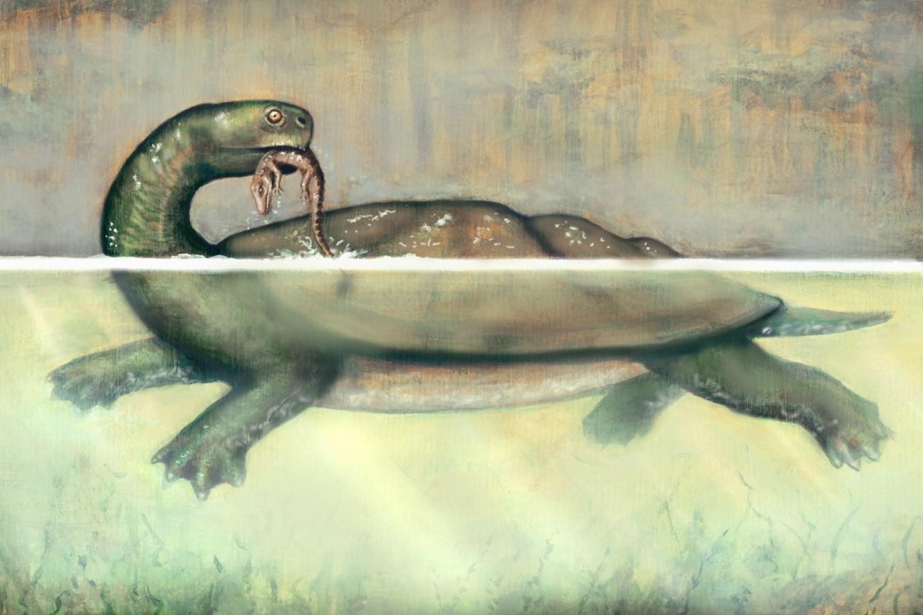 В Колумбии обнаружена доисторическая черепаха размером с автомобиль
