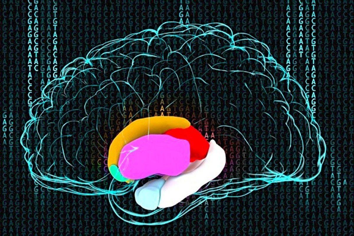 неврологи рассекретили генетику размеров мозга