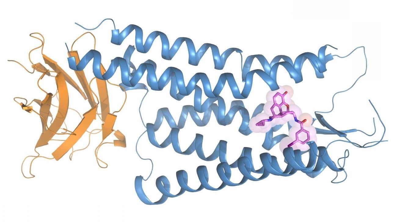 расшифрована структура «обезболивающего» рецептора