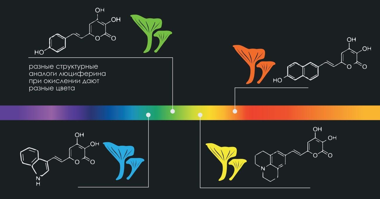 Российские учёные научили грибы светиться всеми цветами радуги