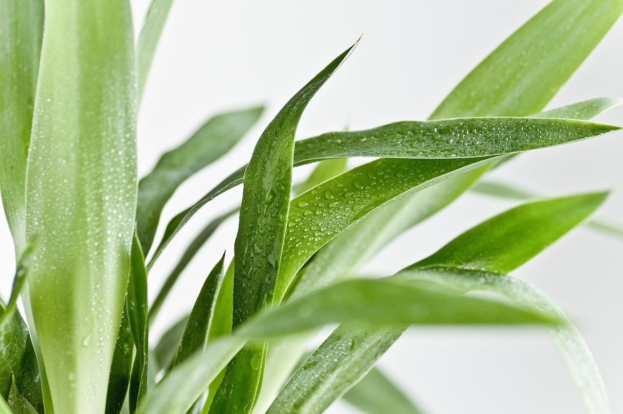 учёные выяснили, как известное растение калечит людей