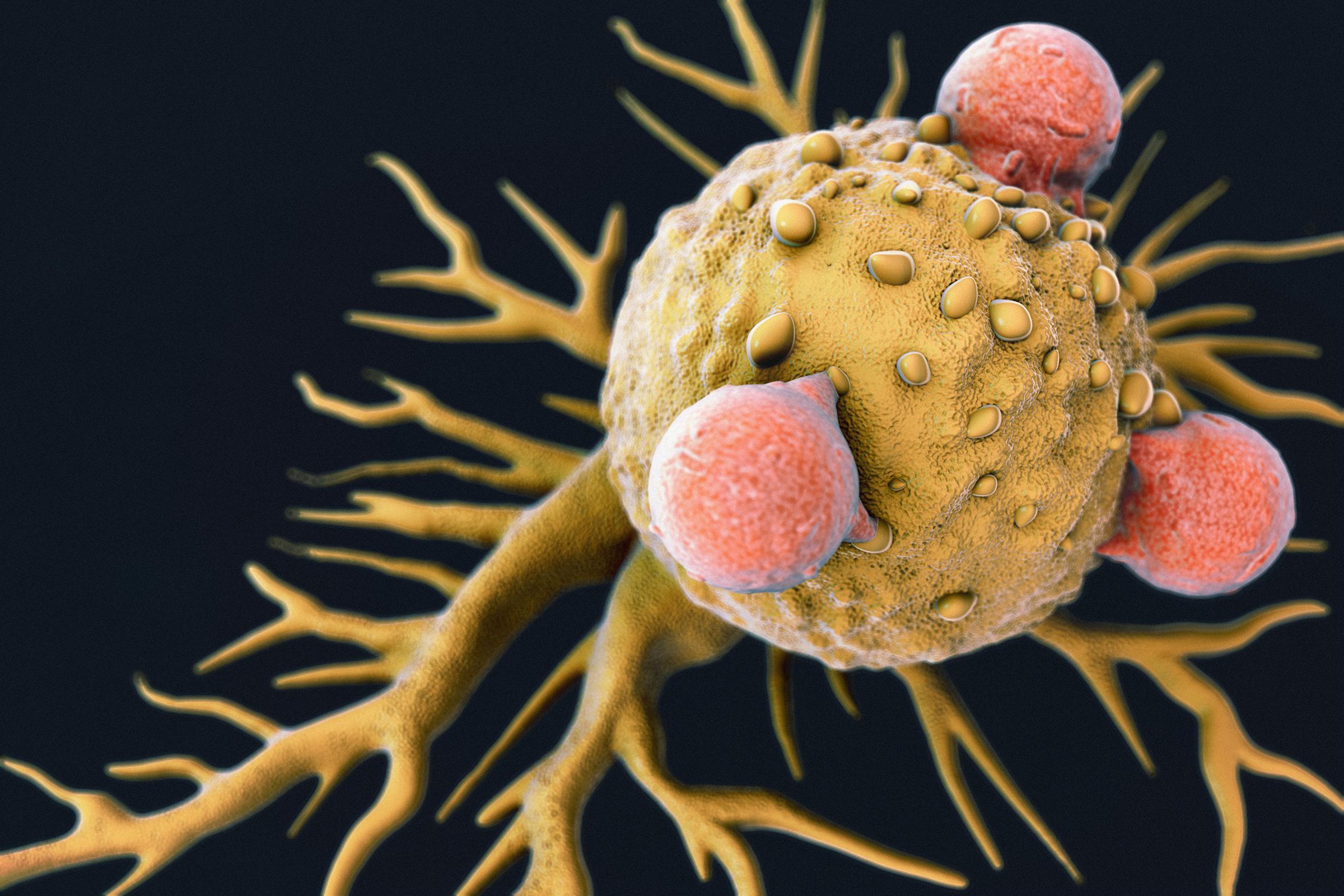 Борьбу с раком предложено вести по двум фронтам