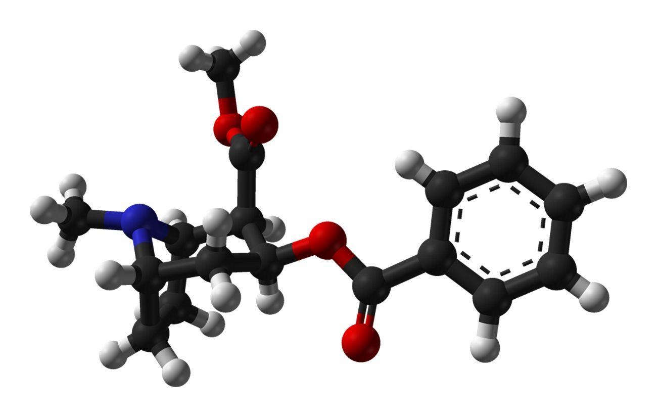 Кокаин заставляет нейроны заниматься cамоедством
