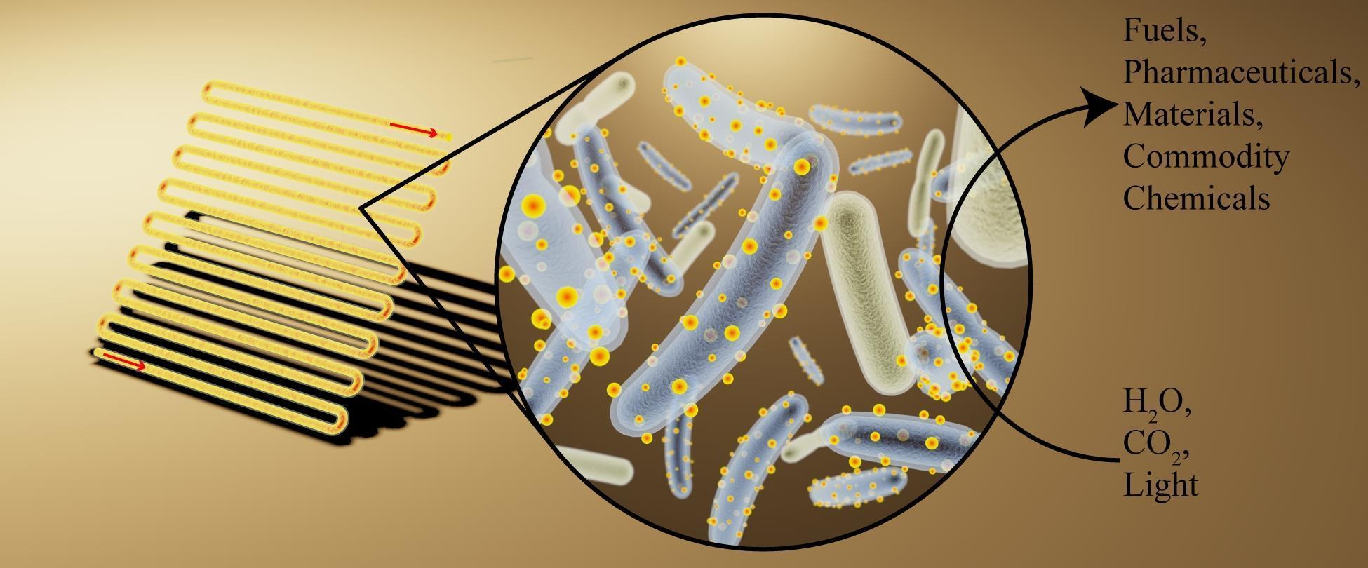 Бактерии-киборги изменят будущее альтернативной энергетики и не только