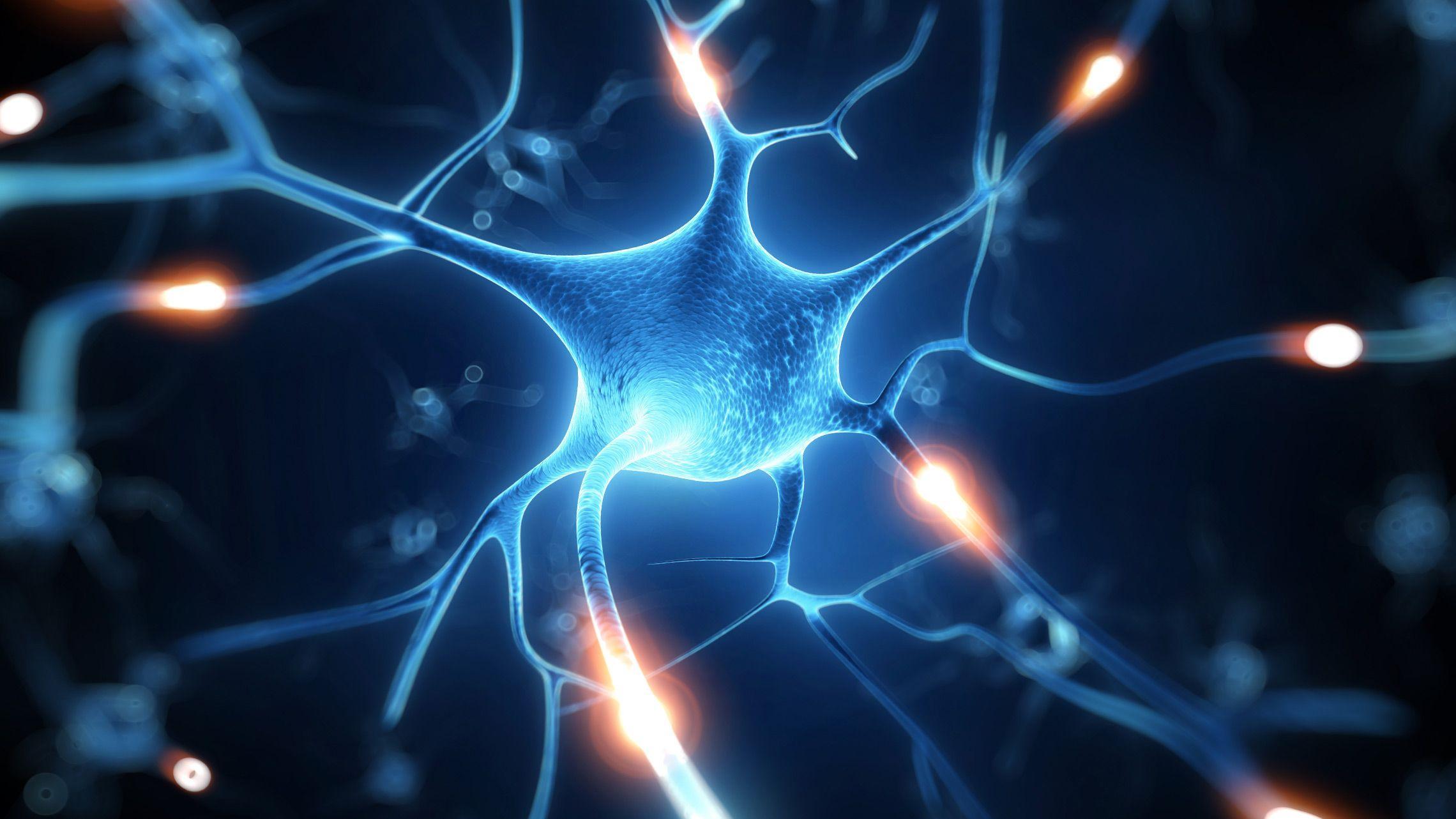 сахарное покрытие нервных клеток связали с долговременной памятью