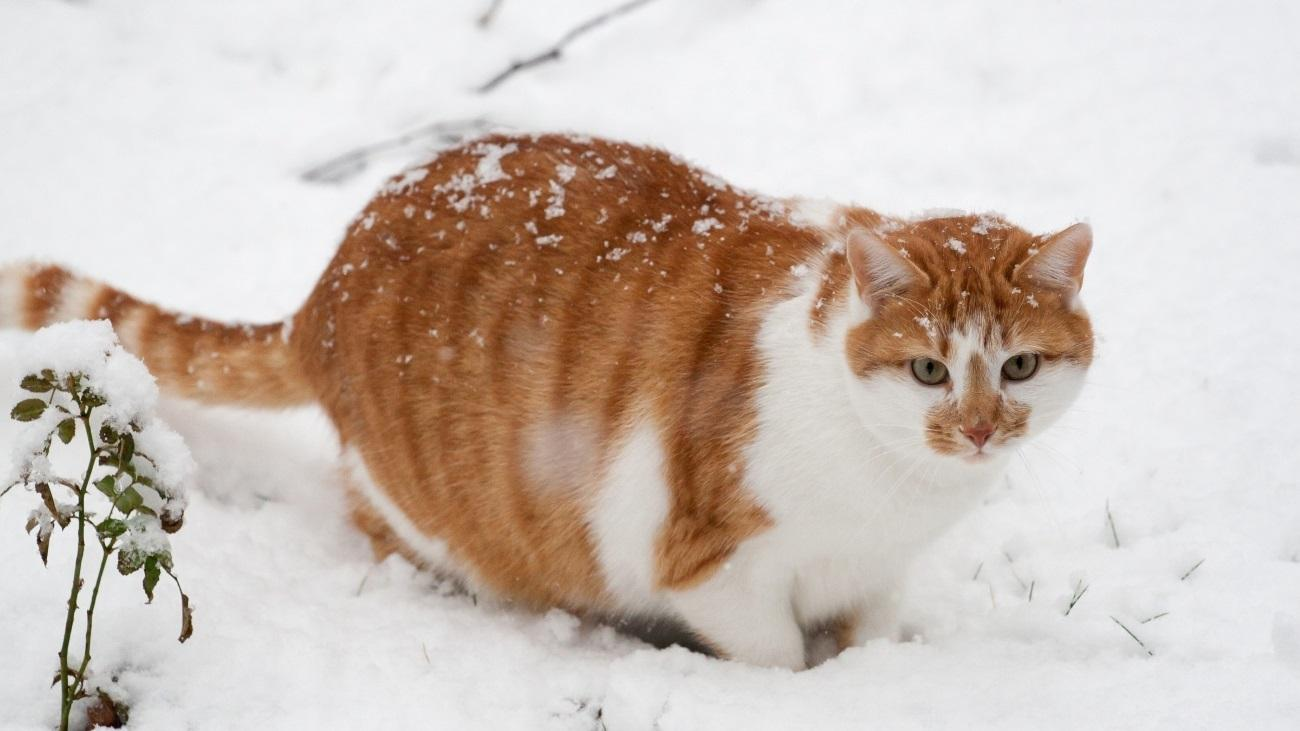 Почему лишний вес чаще набирают зимой
