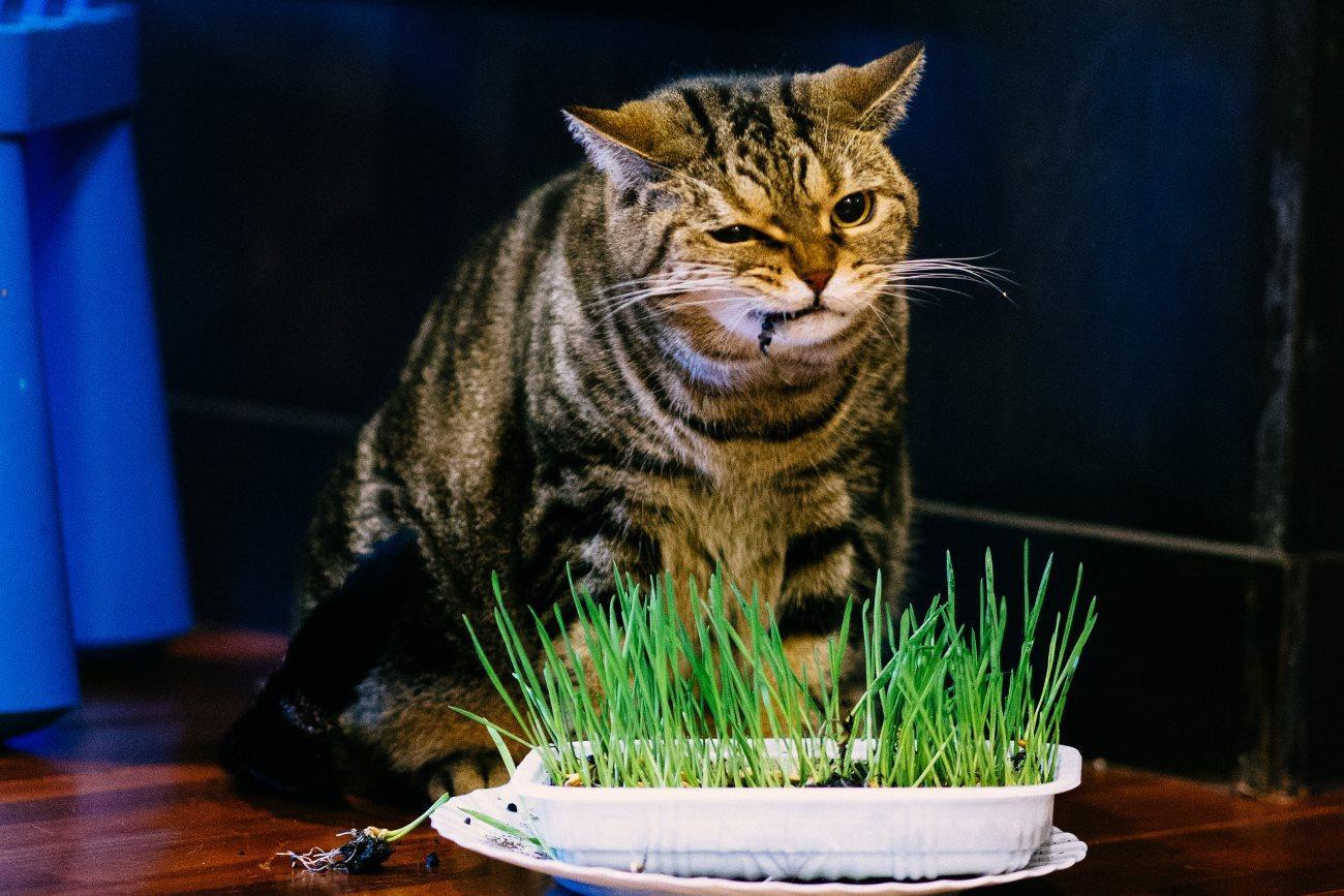 «Здоровое» питание оказалось вредным для окружающей среды