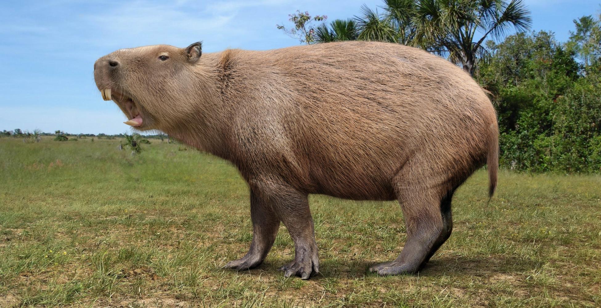 Гигантские грызуны древности использовали резцы как бивни