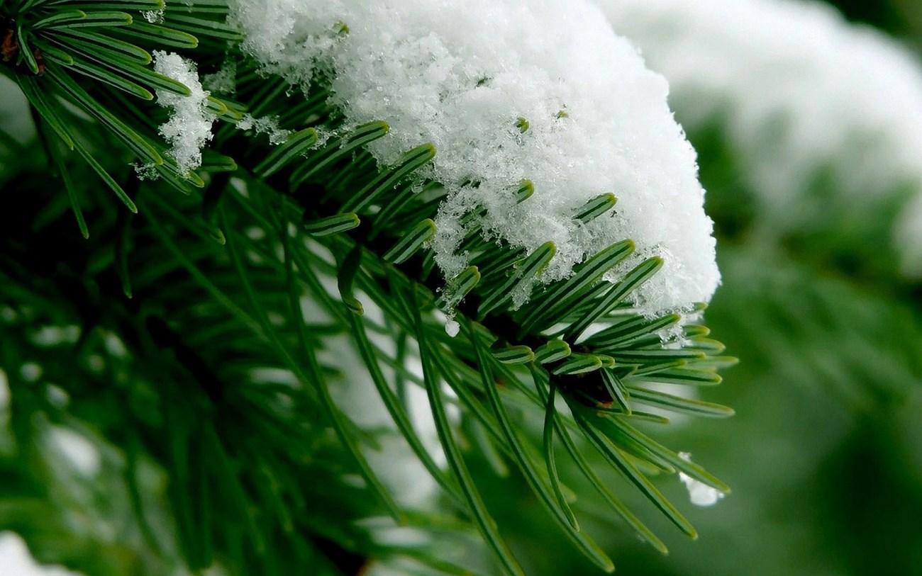 Ранняя из-за глобального потепления весна поможет бороться с глобальным потеплением
