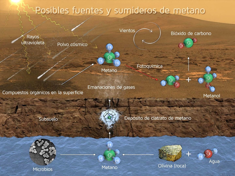 Есть ли коровы на Марсе