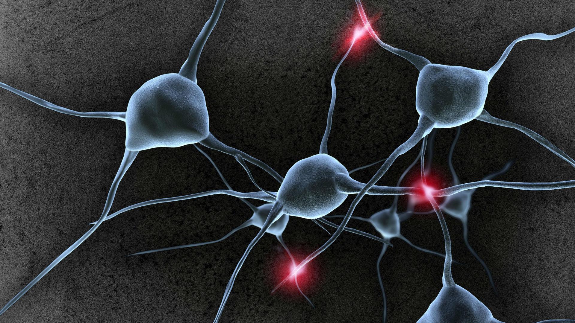 «Сахарное» покрытие нервных клеток связали с долговременной памятью