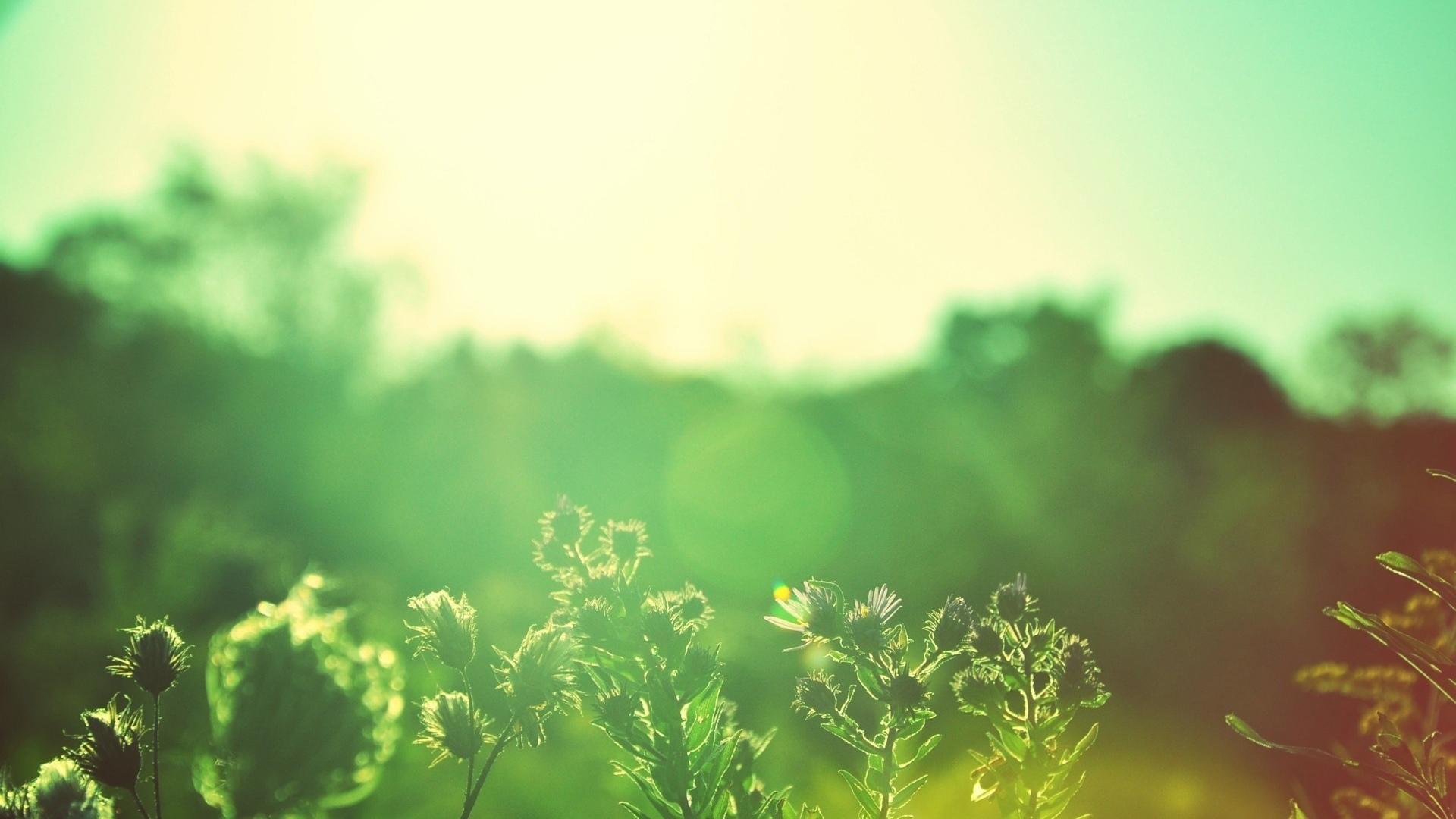 Растения защищаются от жары электричеством