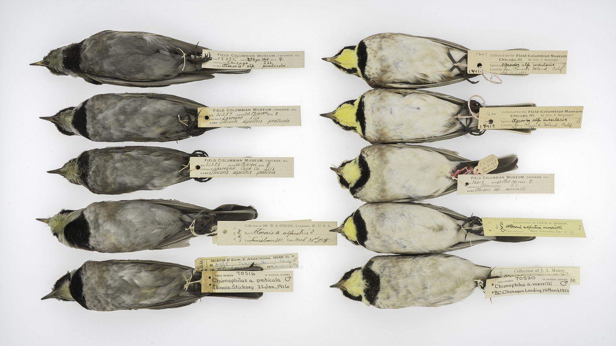 Экологи проследили за загрязнением атмосферы по перьям птиц