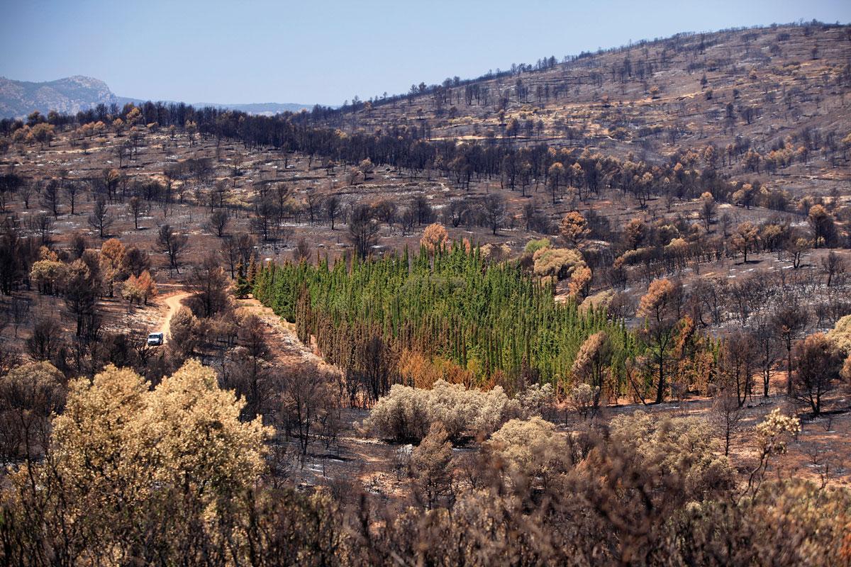 ботаники гадают над тайной устойчивых к пожарам деревьев