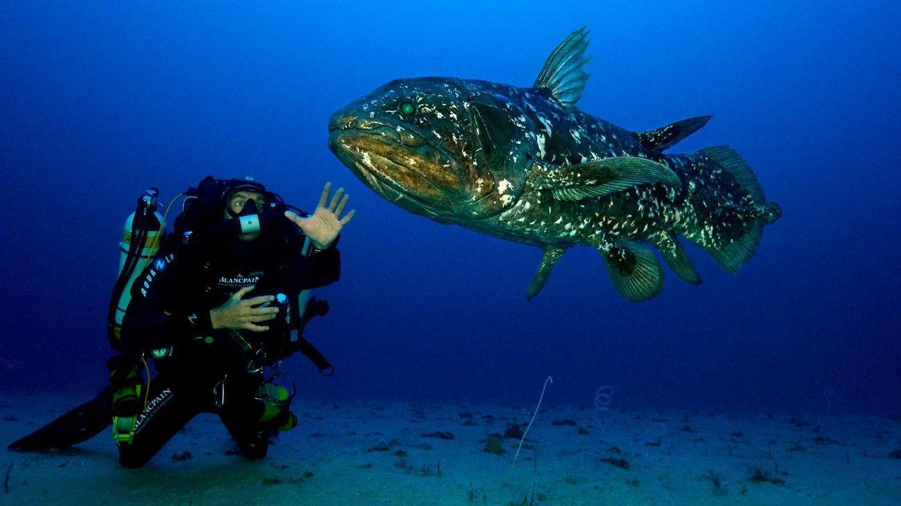 Что общего у рыбьих плавников и звериных лап