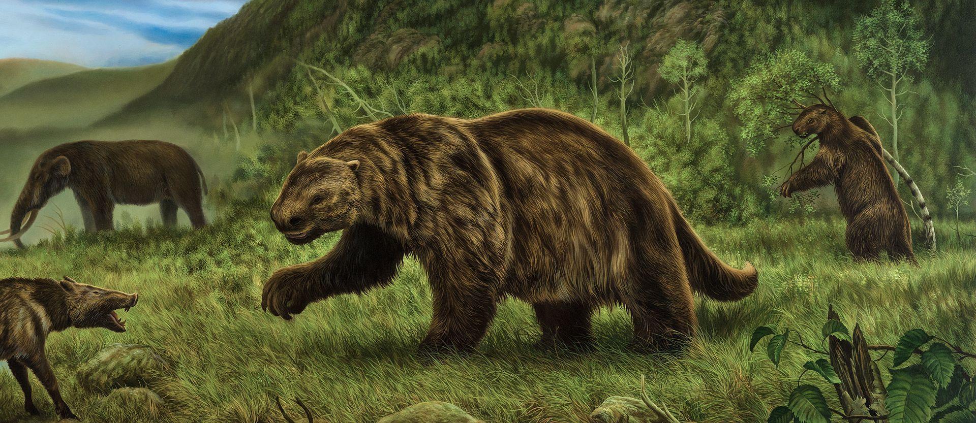 Кости гигантских ленивцев могут пролить свет на историю заселения Америки