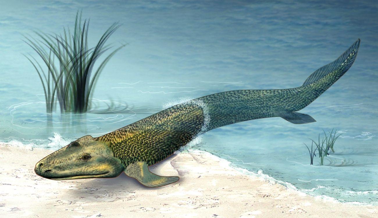 Отливы и приливы выгнали рыб на сушу