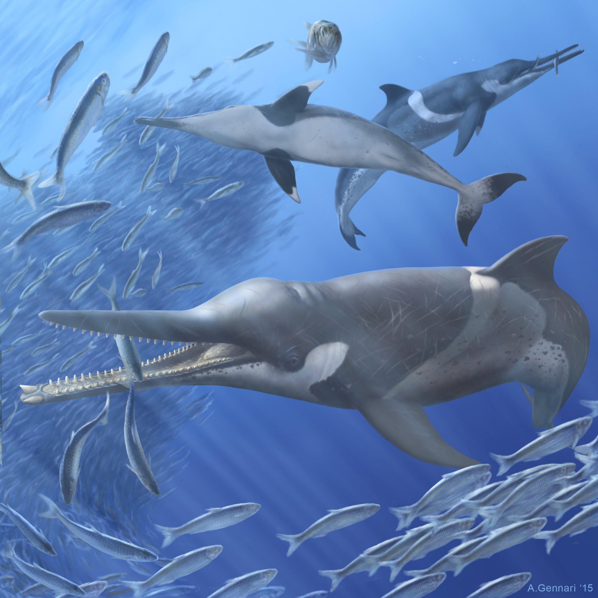 Внутри найденных останков доисторического кита учёные обнаружили съеденных рыб