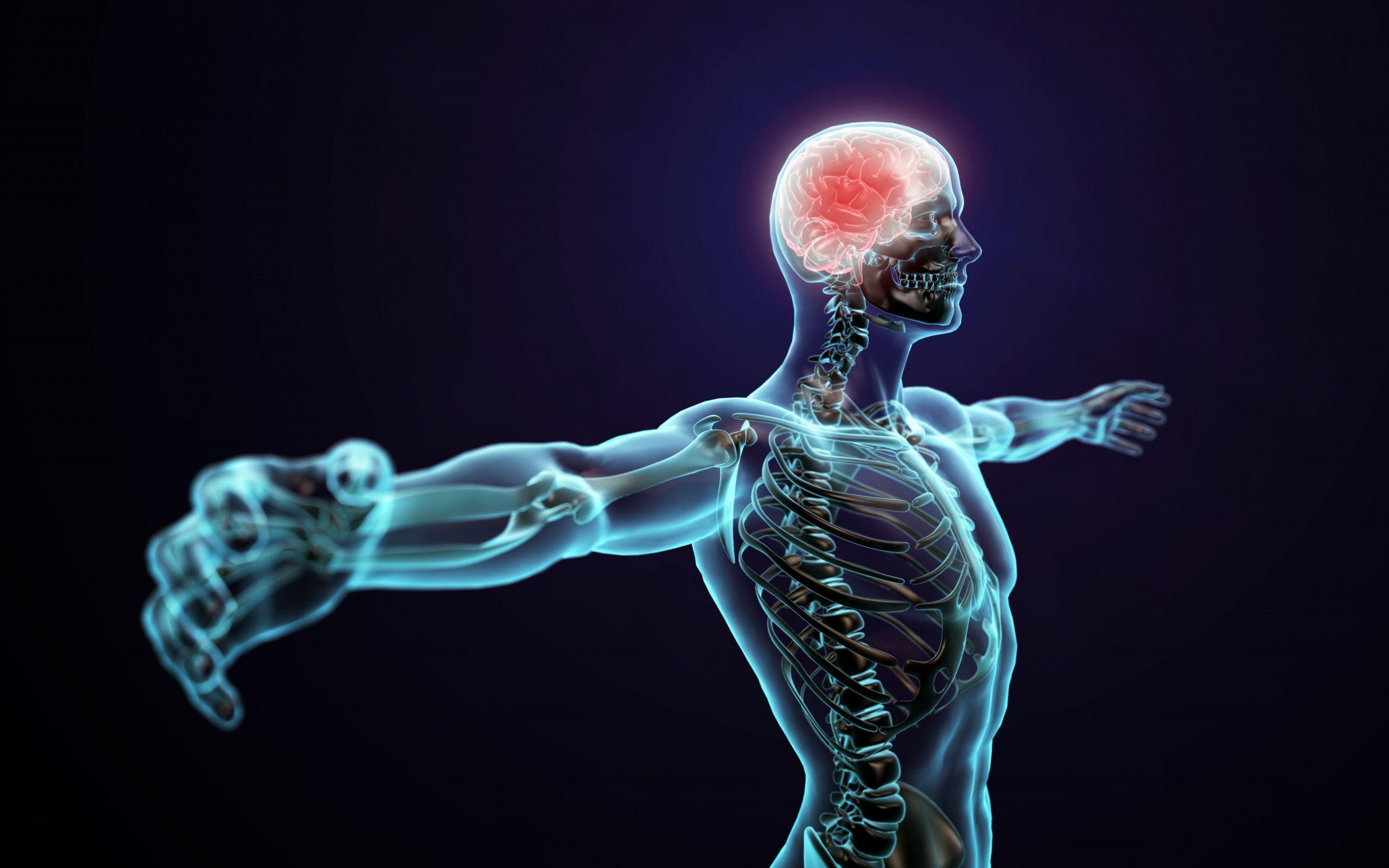 Открыты гены, в которых хранится «мышечная память»