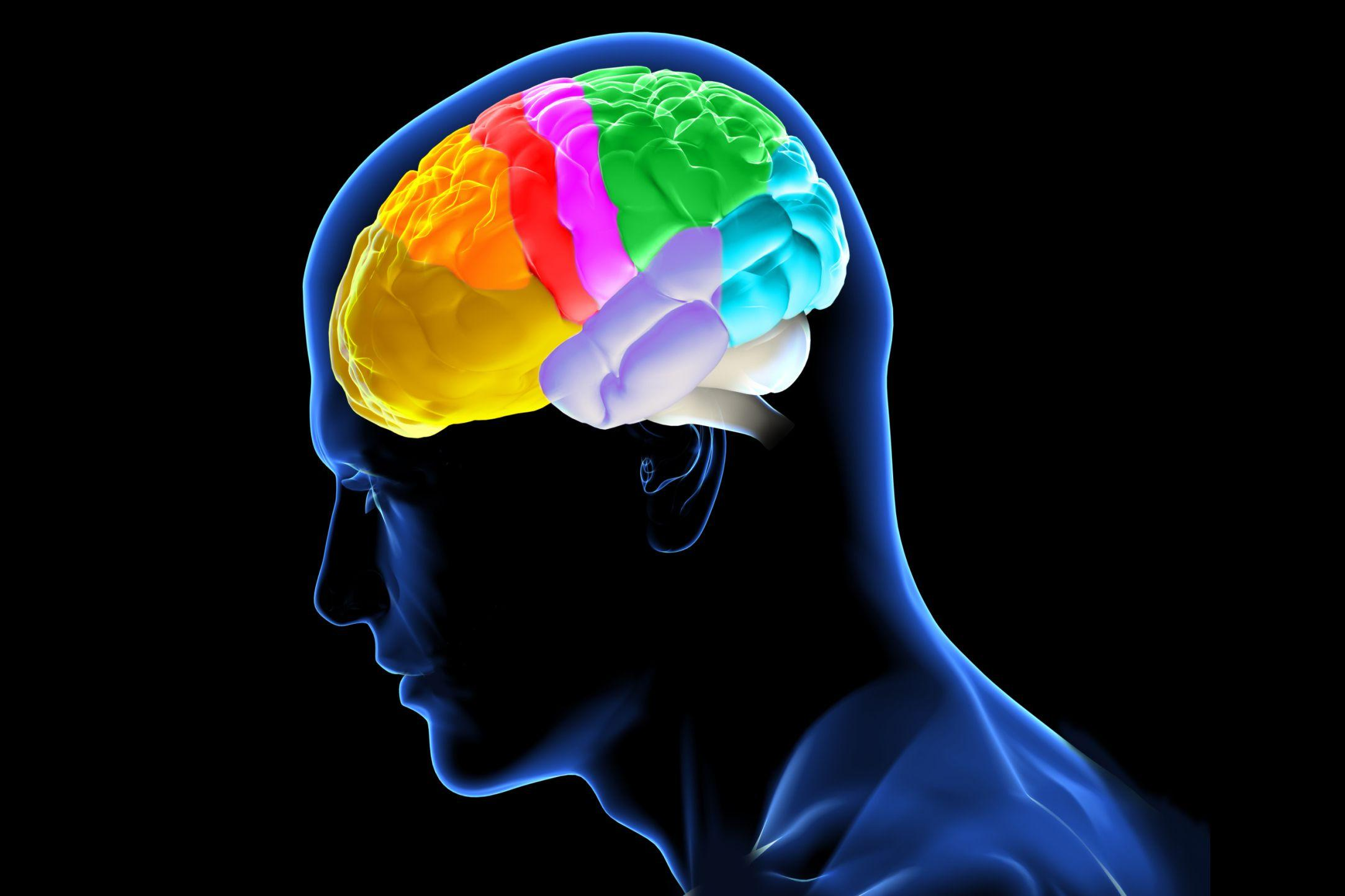 Как работает рабочая память