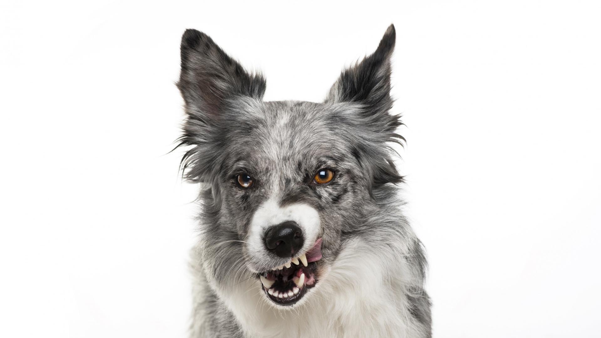 Собаки чаще кусают незнакомцев и эмоционально нестабильных людей