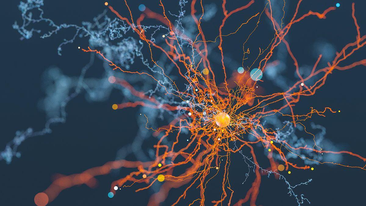 При боковом амиотрофическом склерозе нейроны погибают от «мусора»