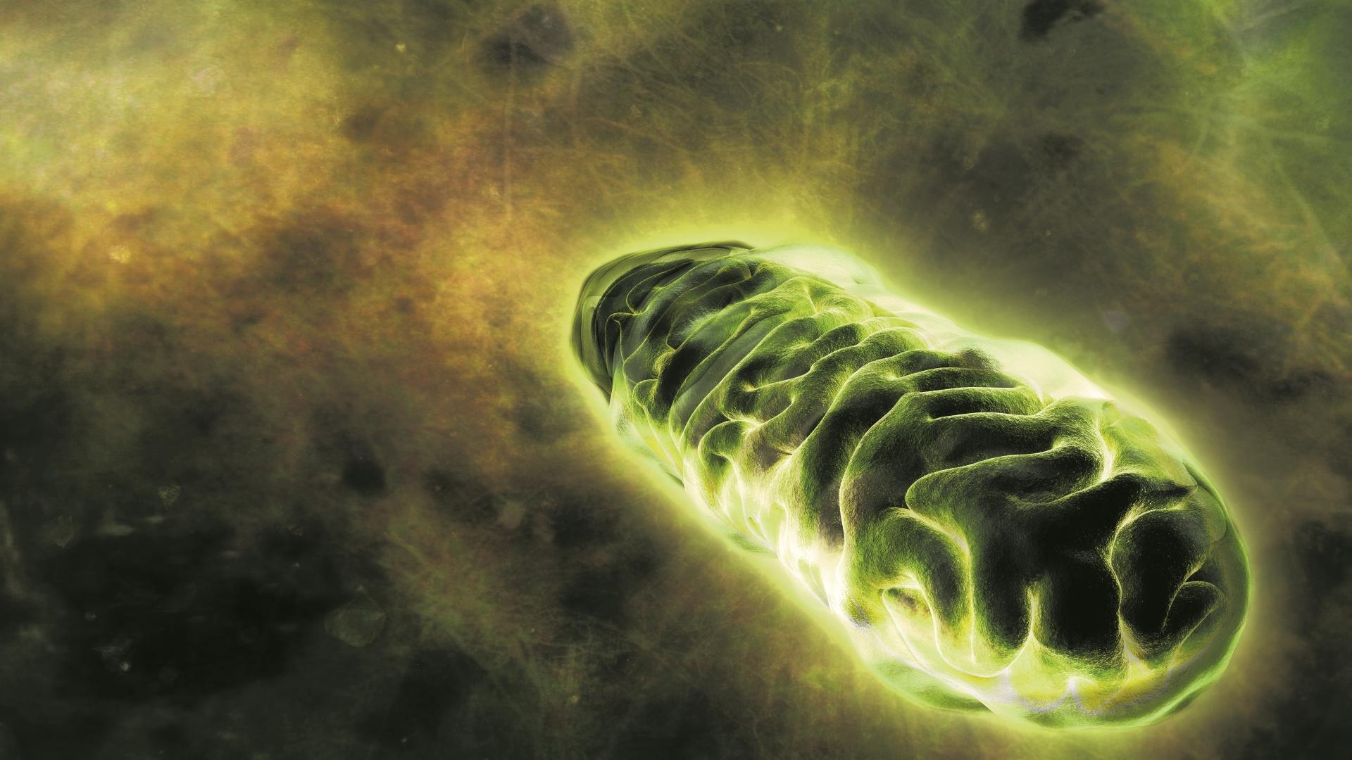 Митохондрии в человеческих клетках разогрелись до 50 градусов