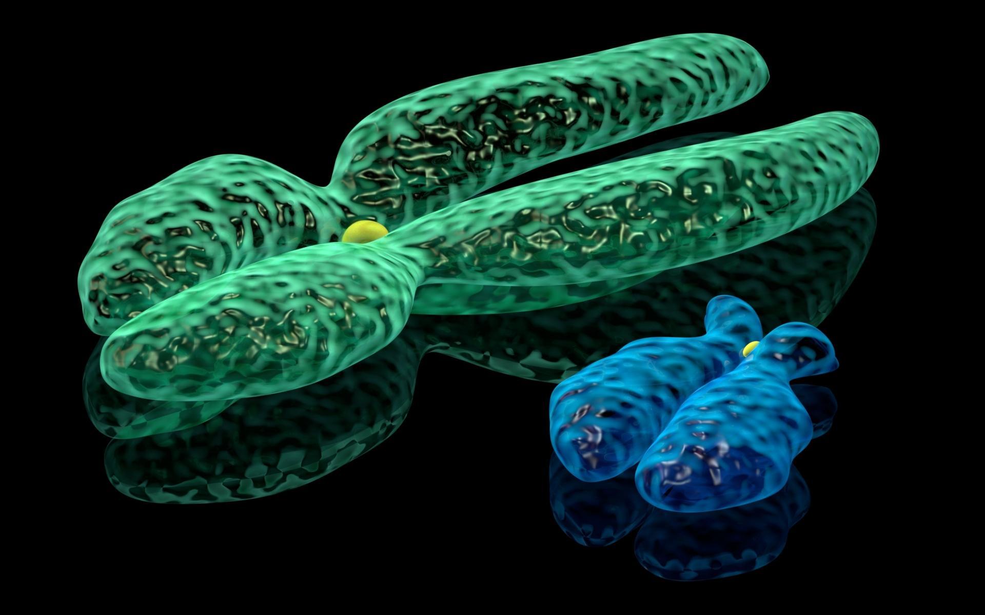 Раскрыто происхождение раковых хромосом-монстров